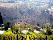 Florenz Urlaub: Sicht von der Ferienwohnung Loggia aus auf den Weinberg